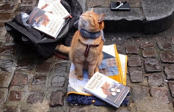 Уличный кот по имени Боб. Как человек и кот обрели надежду на улицах Лондона. Джеймс Боуэн